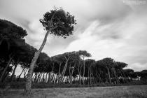 Pineta - Marinella di Sarzana
